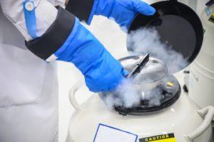 凍結胚移植